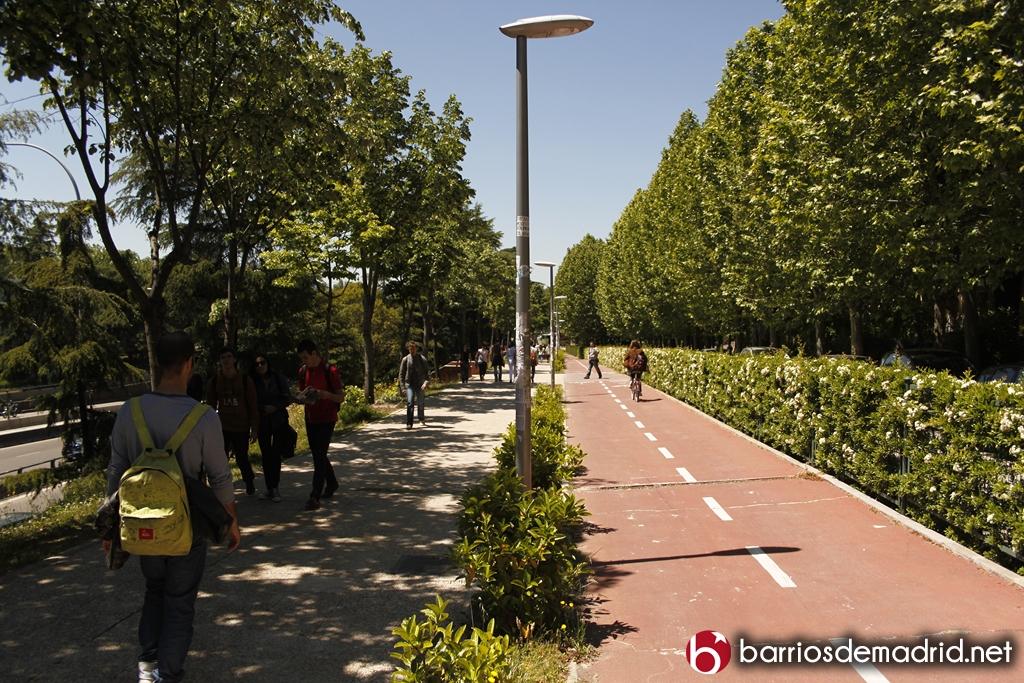 Ciudad universitaria (6)