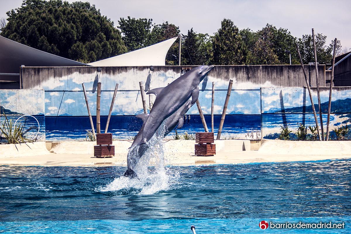 delfines zoo madrid