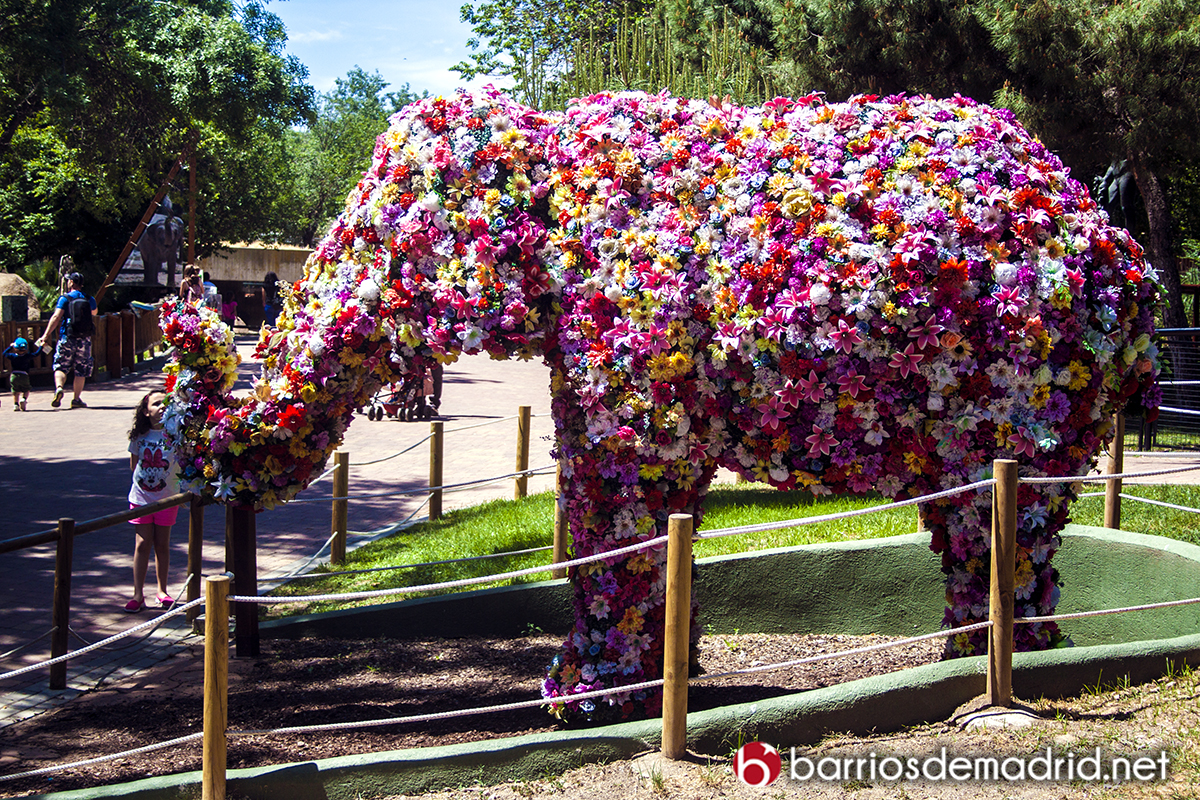 elefante flores zoo madrid