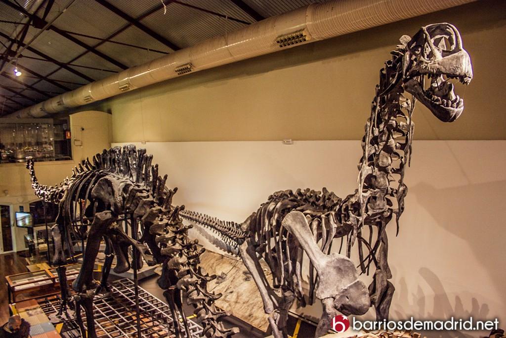 museo ciencias fotos dinosaurios