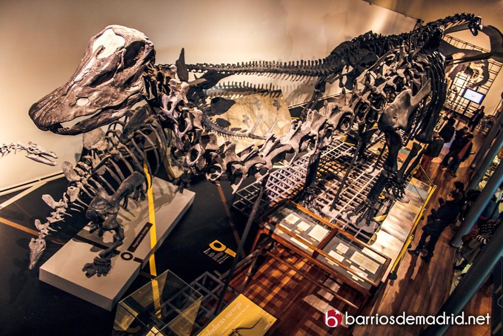 museo ciencias naturales madrid dinosaurios