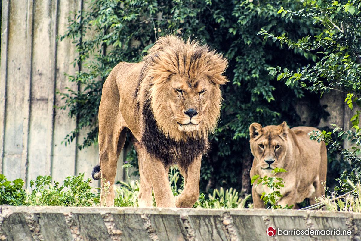 leon zoo madrid