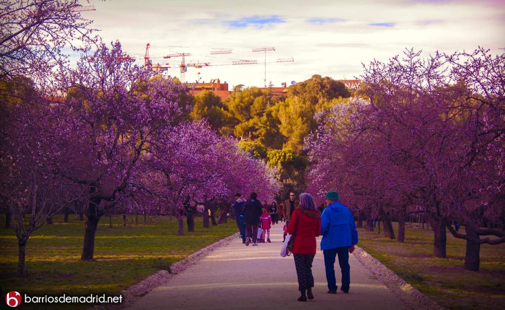 quinta molinos almendros marzo cerezos flor fotografias