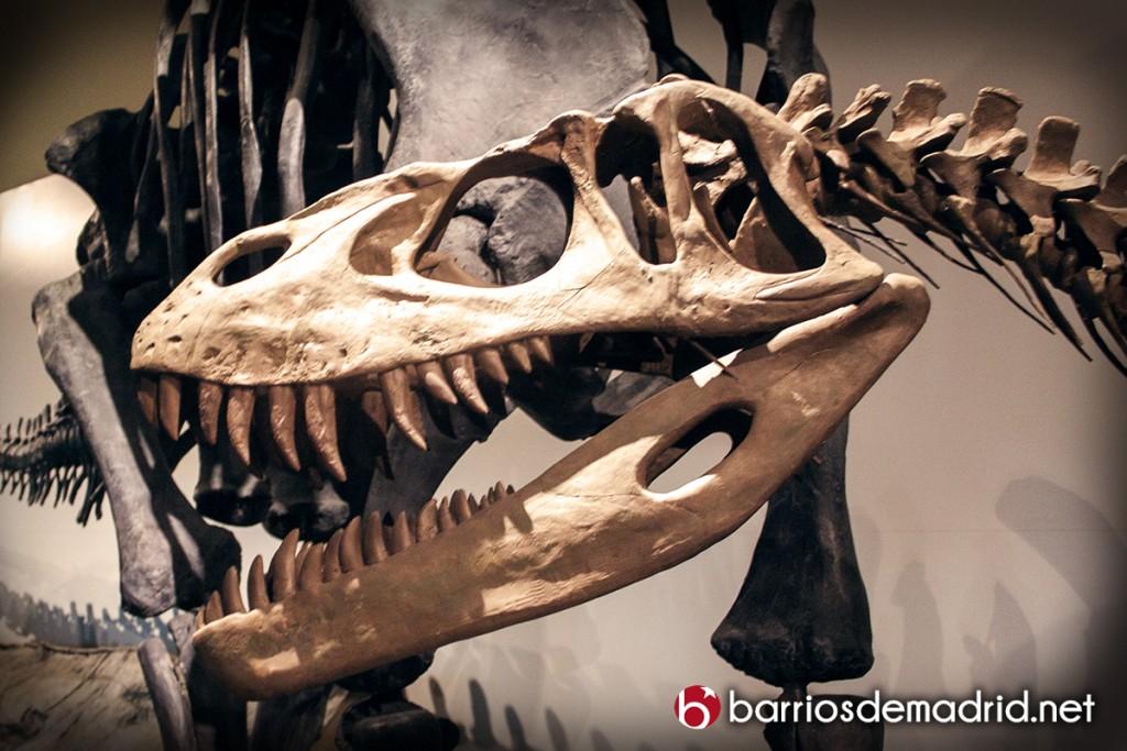 dinosaurio calavera museo ciencias madrid