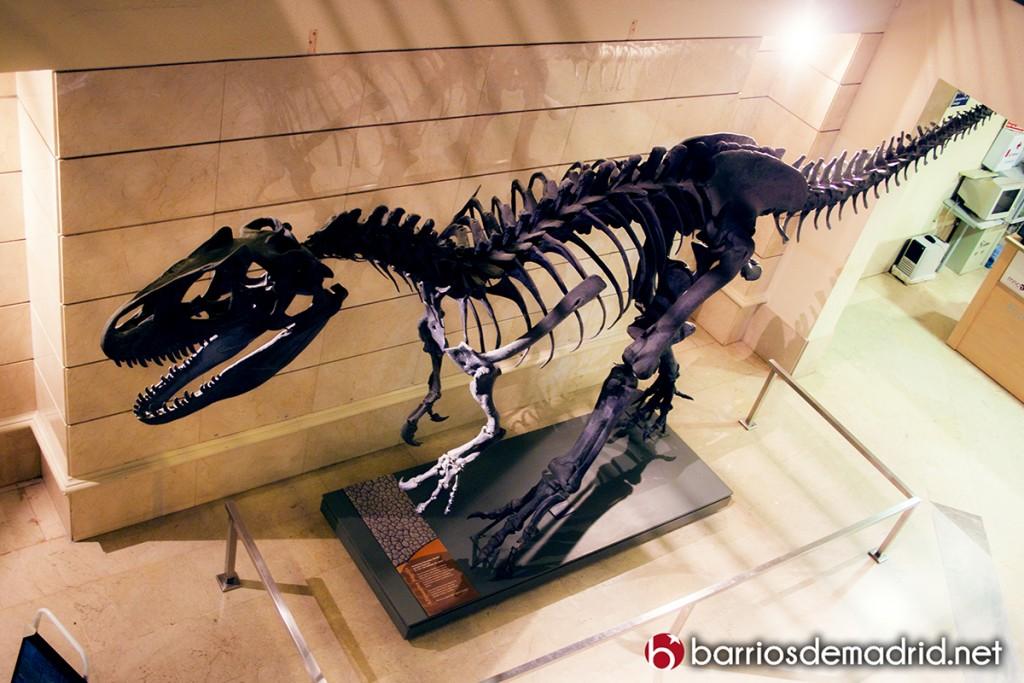 dinosaurio tiranosuarius rex museo ciencias naturales de madrid